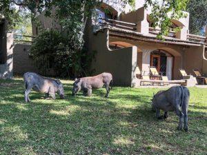 Botswana_Africa_Safari