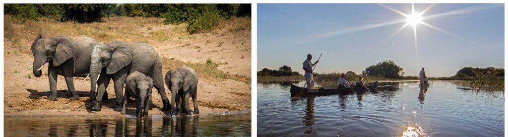 Camp Okavango and Chobe Game Lodge in Botswana
